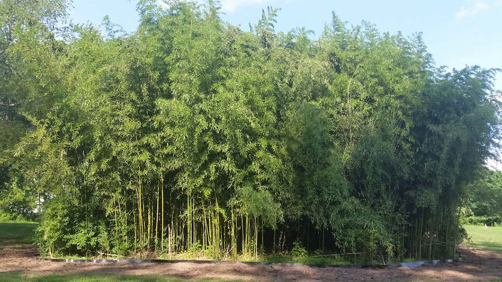 bamboo containment pa 6