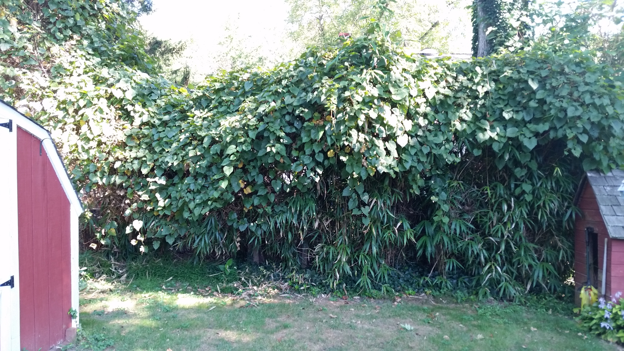 bamboo containment ordinance complaint removal