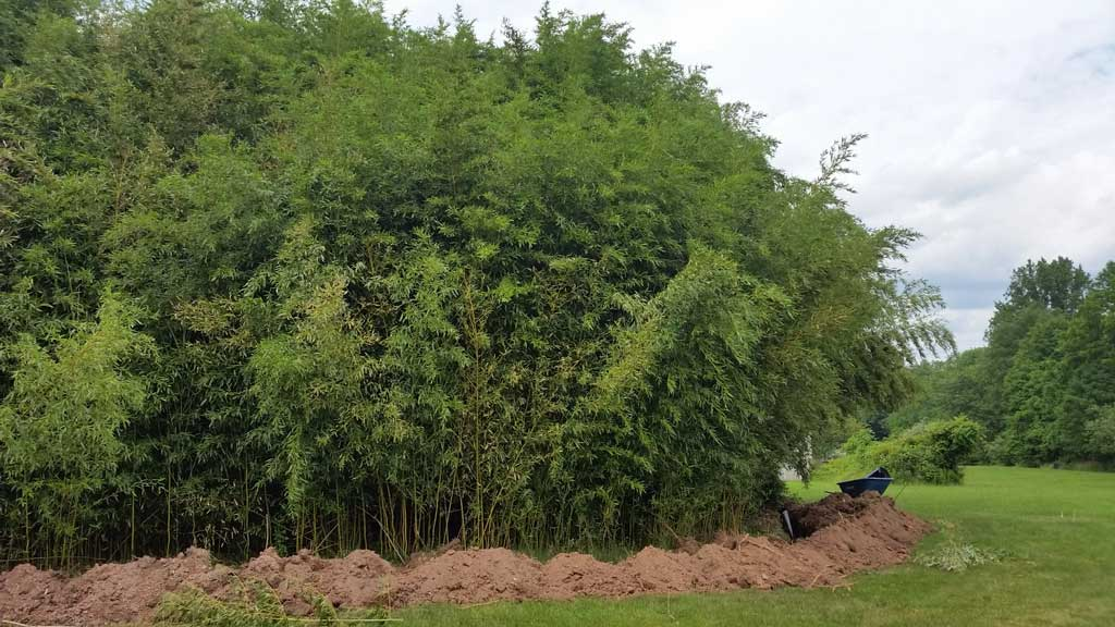 bamboo containment pa 5
