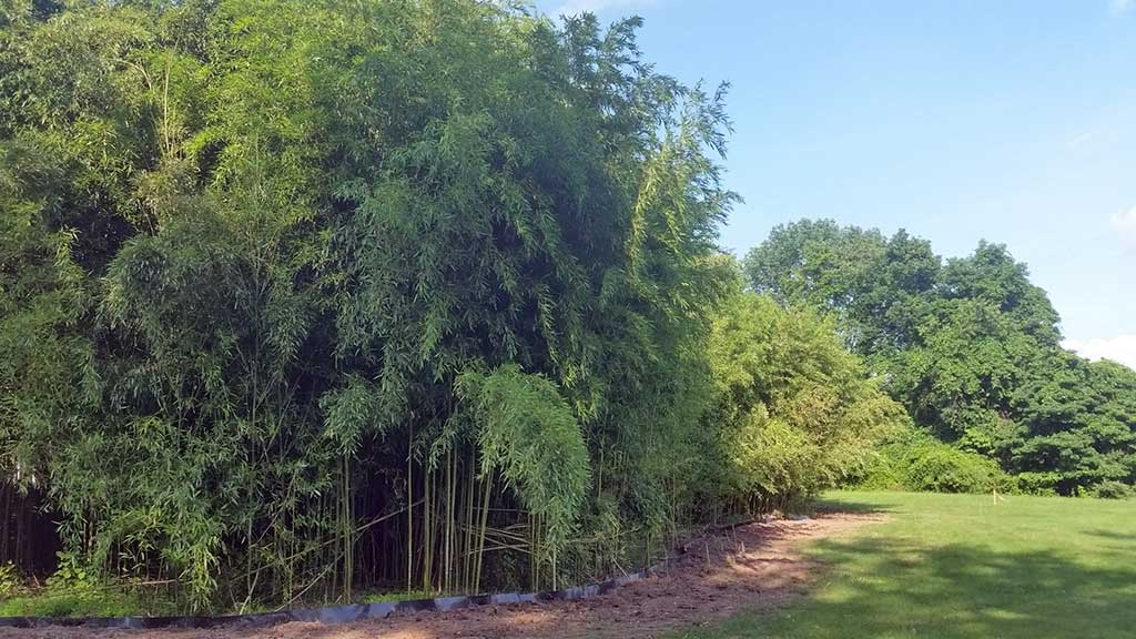 bamboo containment pa 7