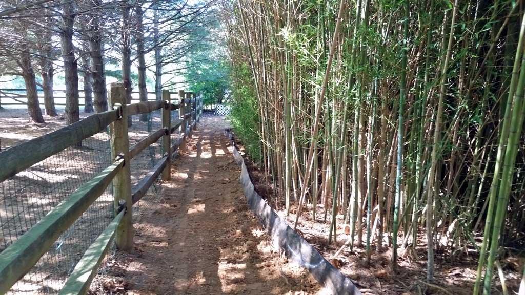 bamboo control NJ PA