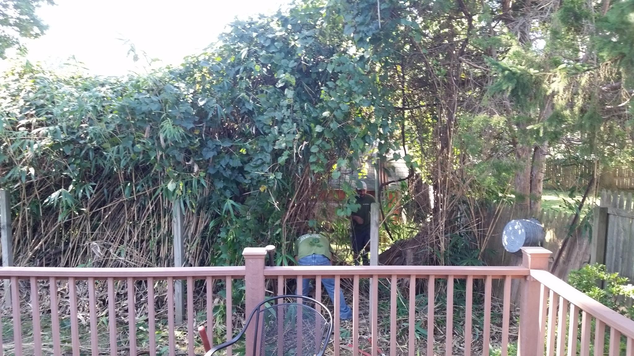 bamboo ordinance Gloucester Township NJ
