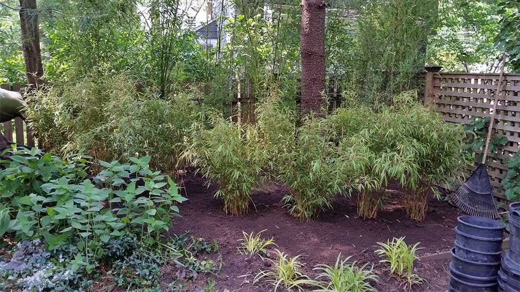Bamboo Ornamental Landscaping Cherry Hill NJ