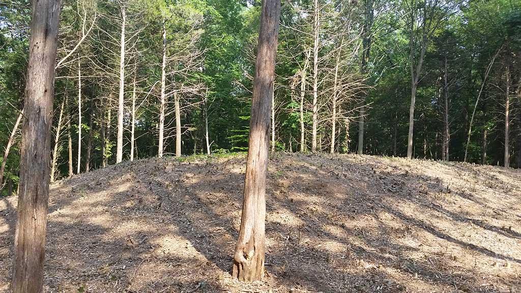 bamboo cane removal bucks county pa