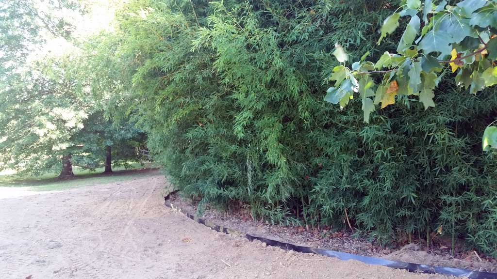 bamboo ordinance control Delaware