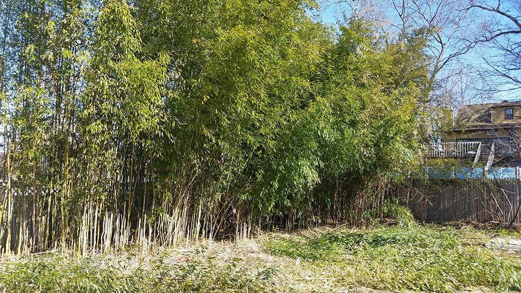 Bamboo Removal Douglass PA