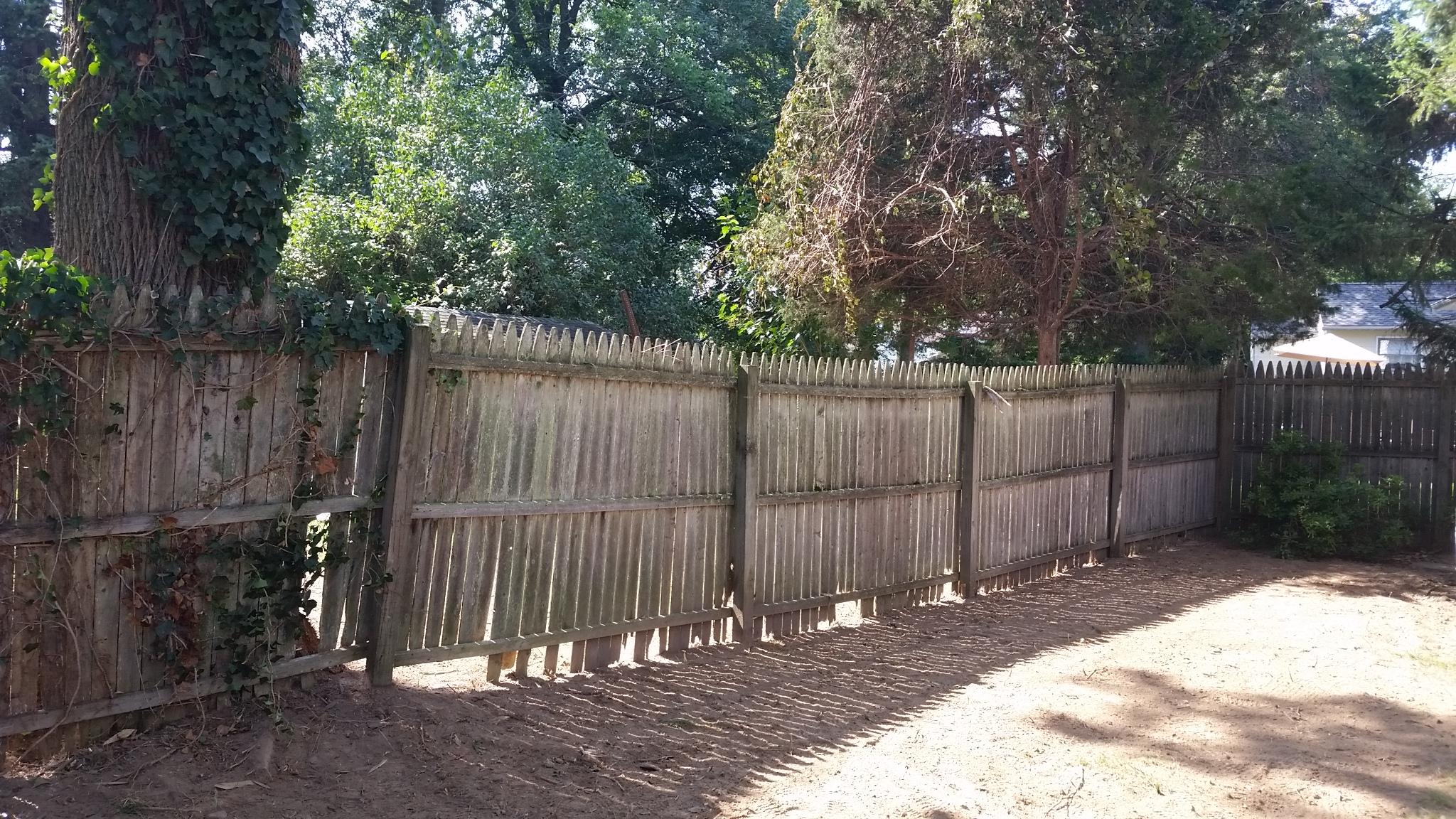 guaranteed bamboo removal