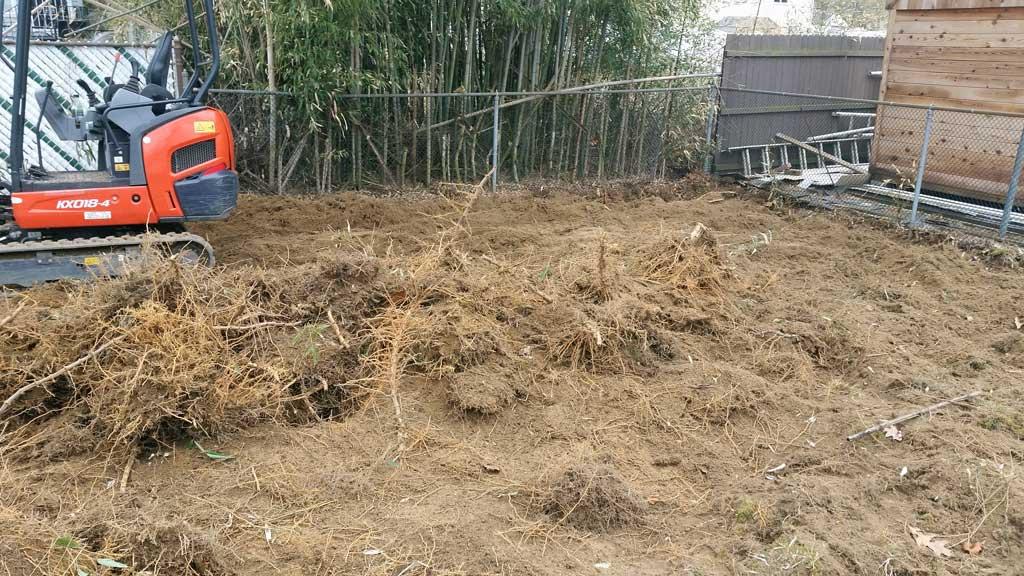 bamboo removal Oaklyn Boro NJ