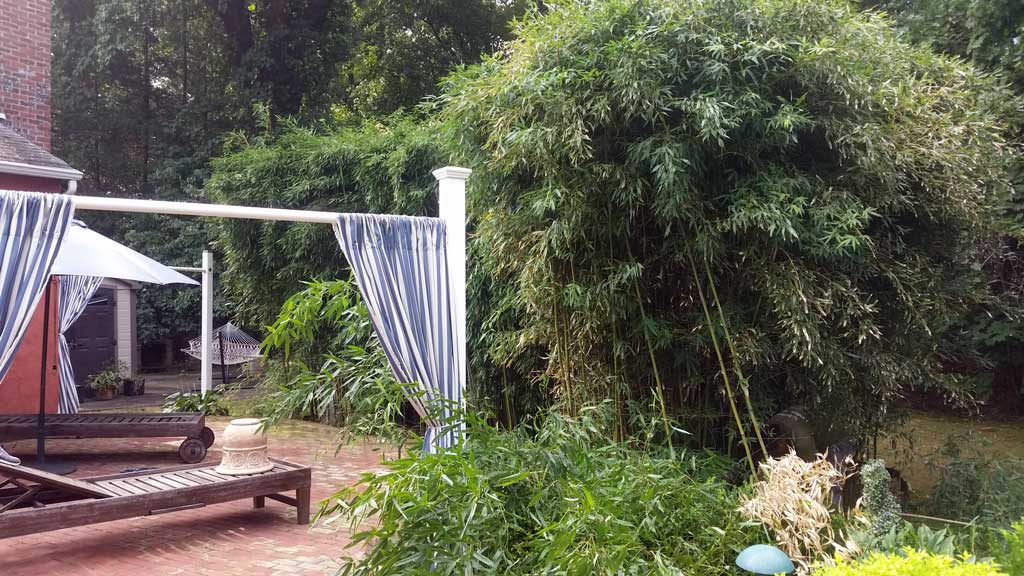bamboo removal Howell Township NJ