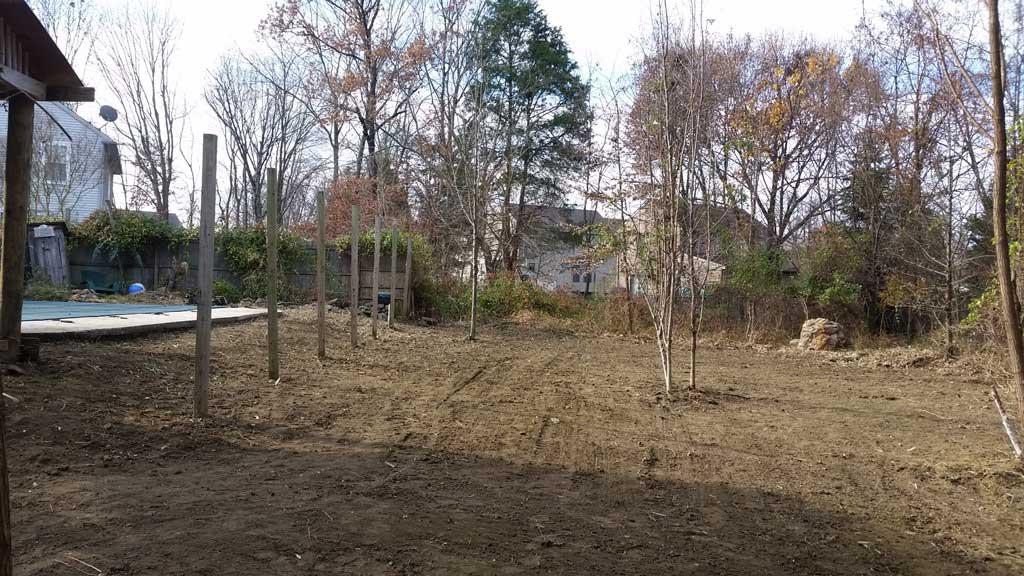 bamboo removal ordinance NJ 12