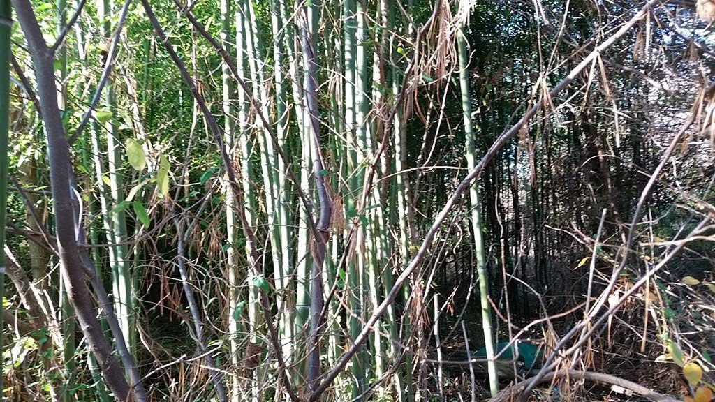 bamboo removal ordinance NJ 3