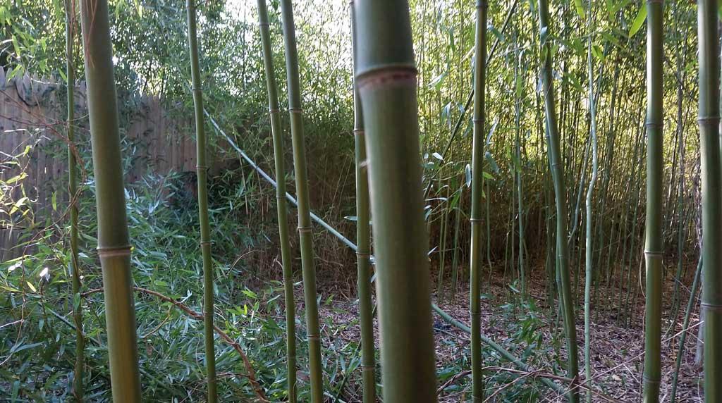 bamboo removal ordinance NJ 4