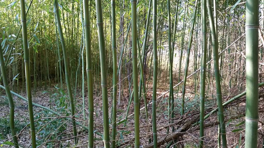 bamboo removal ordinance NJ 5