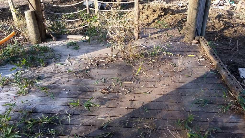 bamboo removal ordinance NJ 6
