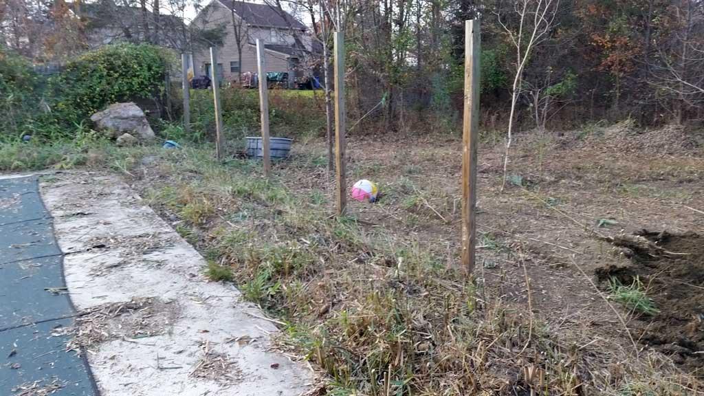 bamboo removal ordinance NJ 8