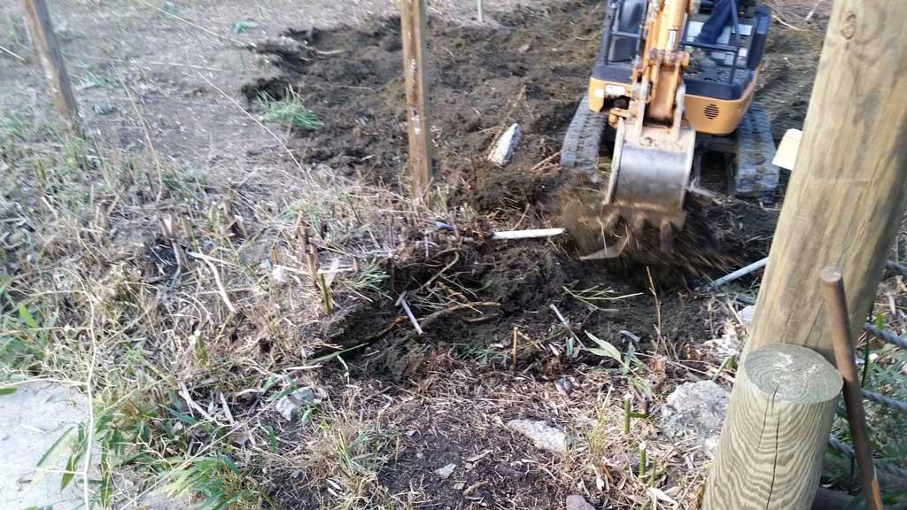 bamboo removal ordinance NJ 9