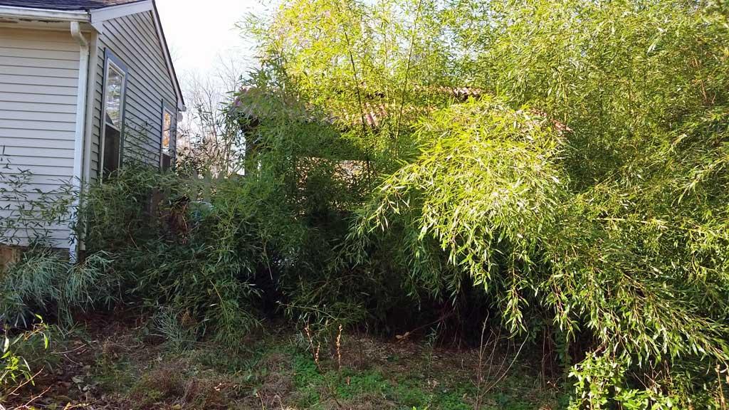 bamboo removal ordinance NJ