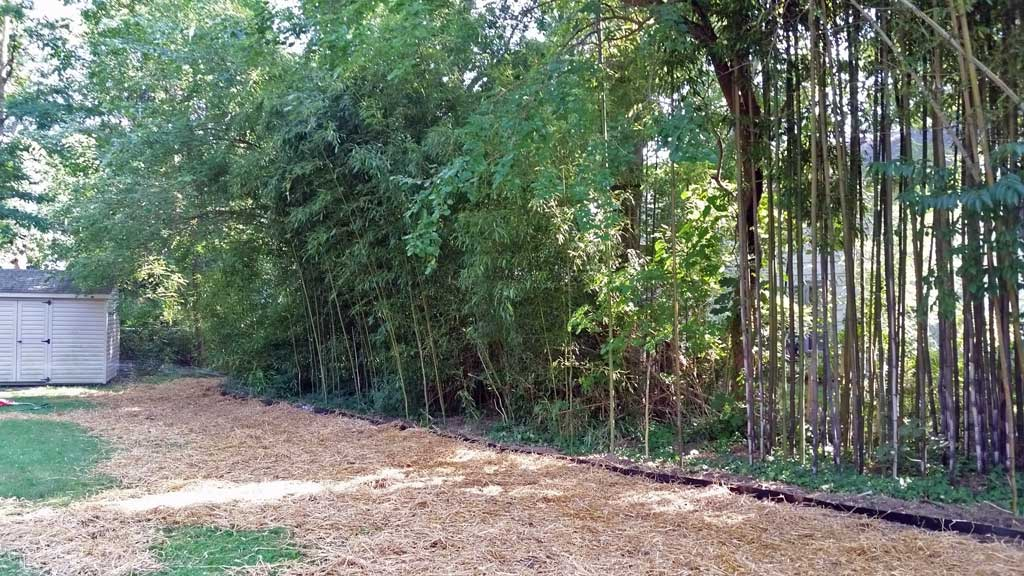bamboo containment rhizome barrier